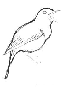 Нарисуем соловья -туловище, крыло и хвостик
