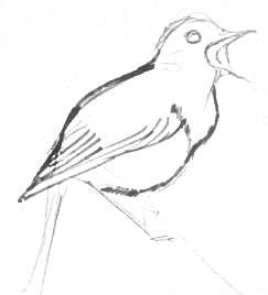 Рисуем туловище соловья