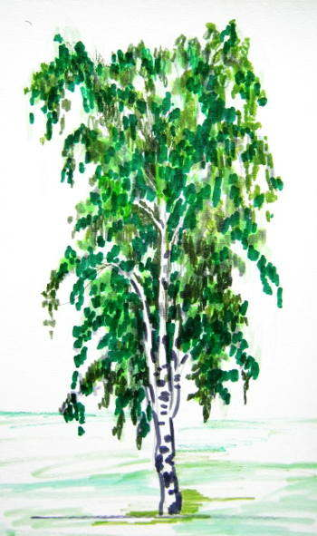 Рисунок берёза