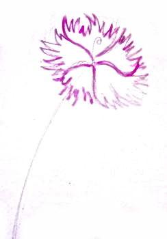 Рисуем полевую гвоздику