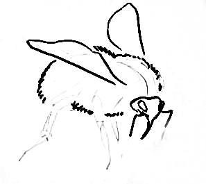 Рисование шмеля поэтапно