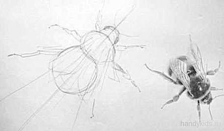 Рисование шмеля