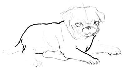 Рисуем туловище мопса