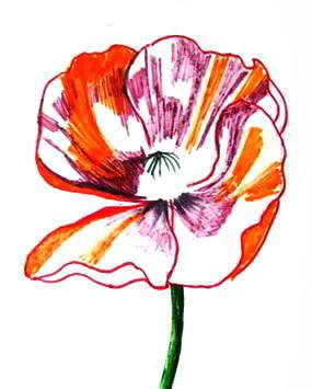 Нарисуем цветок мака