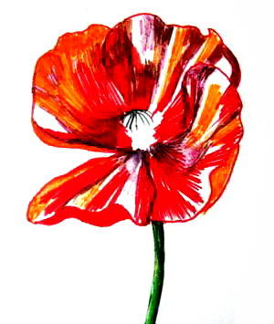 Рисуем цветок декоративного мака