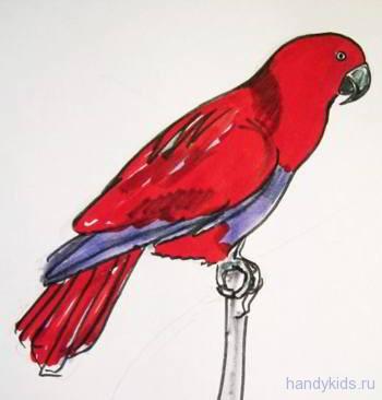 parrot 016
