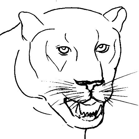 7-How-to-draw-a-panther-face- step-by-step-010