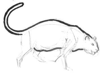 Урок поэтапного рисования пантеры