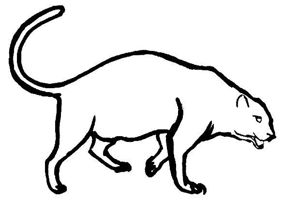 Раскраска Пантера-2