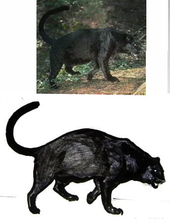 Пантера рисунок