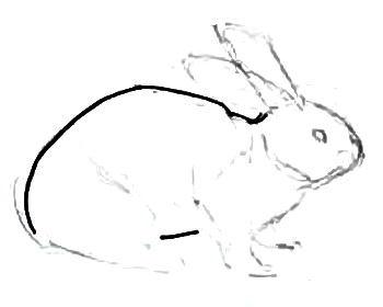 Рисуем кролика поэтапно.