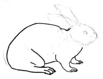 Рисуем кролика карандашом.