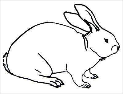 Раскраска Кролик