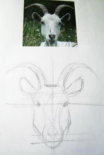 Как нарисовать морду козы поэтапно