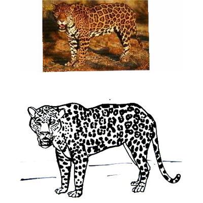 Рисунок -раскраска Ягуар
