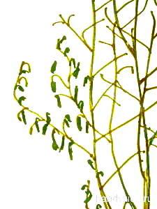Рисуем листья на ветках