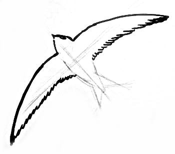 Рисуем летящего стрижа