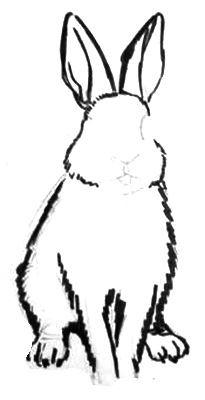 Как рисовать кролика поэтапно.