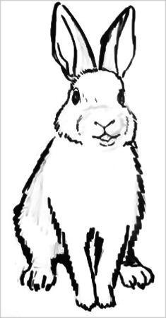Рисунок-раскраска кролик