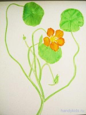 Красивый цветок рисунок