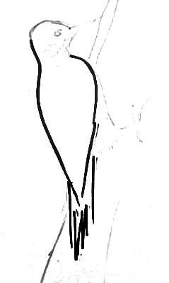 Поэтапный рисунок Дятел