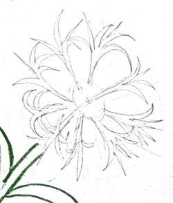 Рисуем цветок василёк