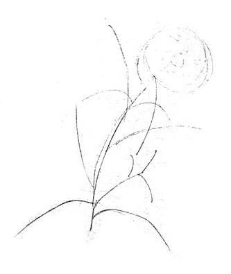Рисуем василёк