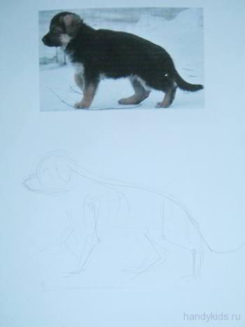 Как нарисовать  щенка овчарки карандашом