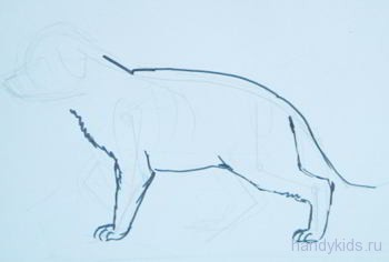Как нарисовать щенка овчарки поэтапно