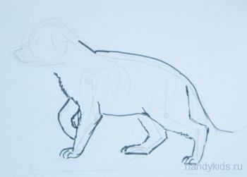 урок поэтапного рисования щенка овчарки