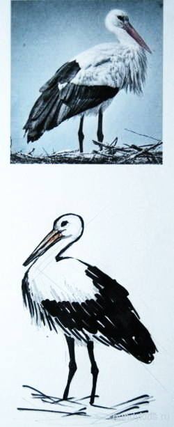 Рисунок аиста
