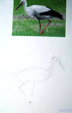 Рисуем идущего аиста