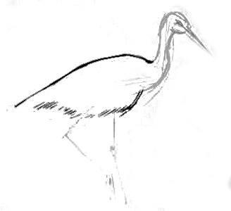Рисуем аиста на болоте