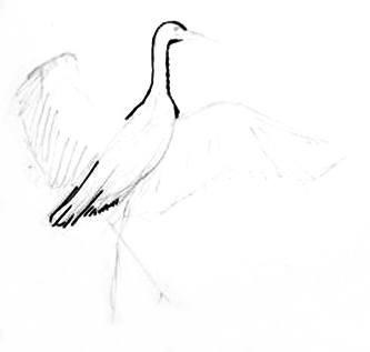 Урок рисования аиста