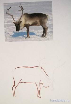 Как рисовать оленя