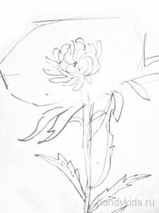 Рисуем цветок астры
