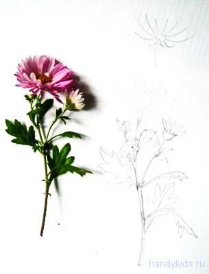 Рисуем хризантему с натуры