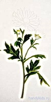 Нарисуем хризантему поэтапно