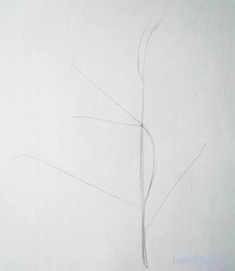 Нарисуем ветку карандашом