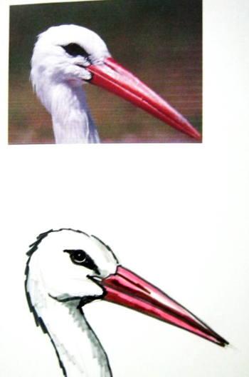 Голова аиста рисунок