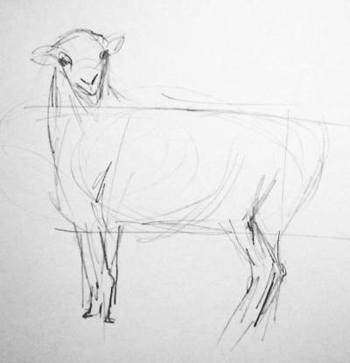 Овца -рисунок карандашом