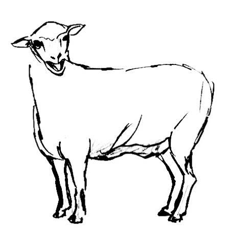 Рисунок овца