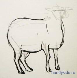 Этапы рисования овечки