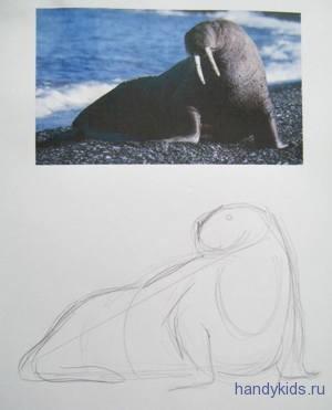 Как нарисовать моржа