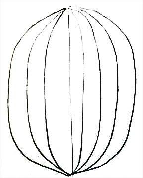 Раскраска кактус 1