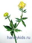 flowers 3 028