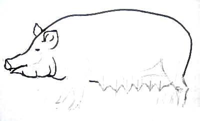 Нарисуем свинью