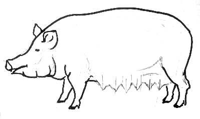 Урок рисования свиньи