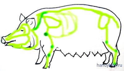 Схема скелета свиньи