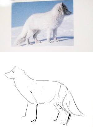 Как нарисовать песца-2